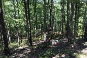 Columbiana Mountain Top Homesites & Timber in Shelby, AL (26 of 37)