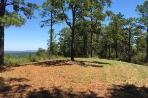 Columbiana Mountain Top Homesites & Timber in Shelby, AL (22 of 37)