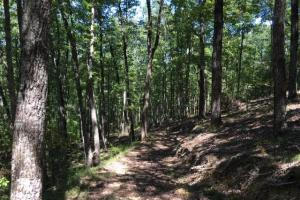 Columbiana Mountain Top Homesites & Timber in Shelby, AL (28 of 37)