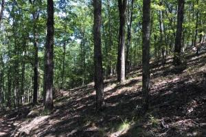 Columbiana Mountain Top Homesites & Timber in Shelby, AL (27 of 37)