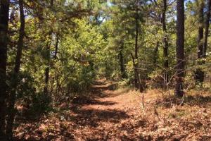 Columbiana Mountain Top Homesites & Timber in Shelby, AL (29 of 37)