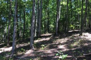 Columbiana Mountain Top Homesites & Timber in Shelby, AL (35 of 37)