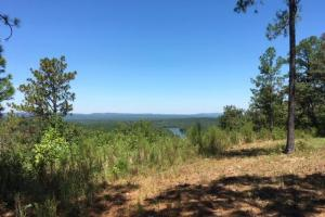 Columbiana Mountain Top Homesites & Timber in Shelby, AL (17 of 37)