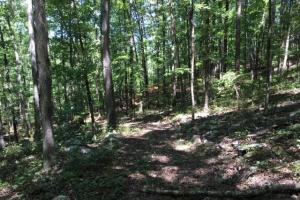 Columbiana Mountain Top Homesites & Timber in Shelby, AL (33 of 37)
