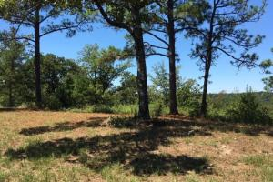 Columbiana Mountain Top Homesites & Timber in Shelby, AL (20 of 37)