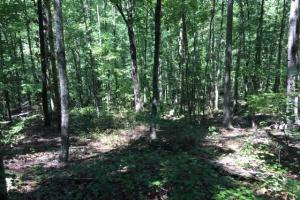 Columbiana Mountain Top Homesites & Timber in Shelby, AL (34 of 37)