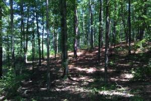 Columbiana Mountain Top Homesites & Timber in Shelby, AL (30 of 37)
