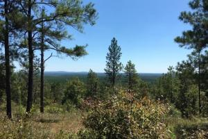 Columbiana Mountain Top Homesites & Timber in Shelby, AL (19 of 37)