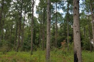 Zorn Road Timber Tract - Barbour County AL