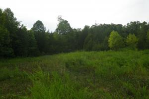 189 acre Hunting Farm in Southern Kentucky in Metcalfe, KY (26 of 38)