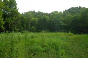 189 acre Hunting Farm in Southern Kentucky in Metcalfe, KY (28 of 38)