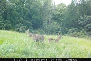 189 acre Hunting Farm in Southern Kentucky in Metcalfe, KY (9 of 38)
