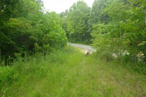 189 acre Hunting Farm in Southern Kentucky in Metcalfe, KY (11 of 38)