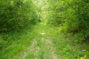 189 acre Hunting Farm in Southern Kentucky in Metcalfe, KY (21 of 38)