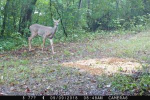 189 acre Hunting Farm in Southern Kentucky in Metcalfe, KY (6 of 38)