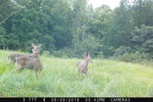 189 acre Hunting Farm in Southern Kentucky in Metcalfe, KY (4 of 38)