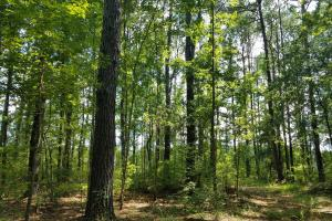 Cotton Hill Road Recreation & Homesite - Barbour County AL