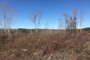 Etteca Road Homesite - Hunting in Fayette, AL (11 of 17)