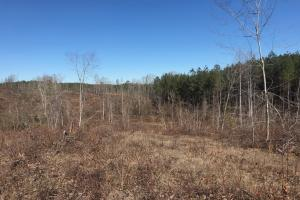 Etteca Road Homesite - Hunting in Fayette, AL (13 of 17)