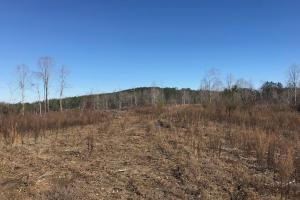 Etteca Road Homesite - Hunting in Fayette, AL (8 of 17)