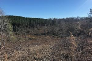 Etteca Road Homesite - Hunting in Fayette, AL (15 of 17)