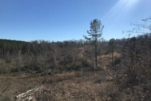 Etteca Road Homesite - Hunting in Fayette, AL (14 of 17)