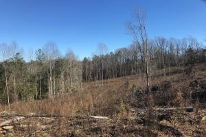 Etteca Road Homesite - Hunting in Fayette, AL (7 of 17)