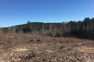 Etteca Road Homesite - Hunting in Fayette, AL (6 of 17)