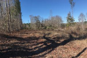 Etteca Road Homesite - Hunting in Fayette, AL (17 of 17)