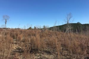 Etteca Road Homesite - Hunting in Fayette, AL (16 of 17)