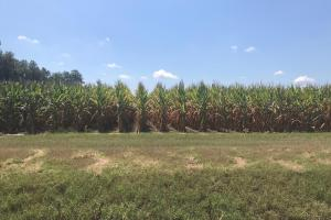 120+/- Acre Row Crop Farm - Lonoke County AR