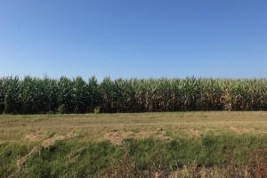 120+/- Acre Row Crop Farm in Lonoke, AR (5 of 12)