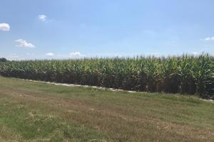 120+/- Acre Row Crop Farm in Lonoke, AR (2 of 12)