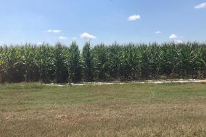 120+/- Acre Row Crop Farm in Lonoke, AR (3 of 12)