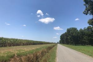 120+/- Acre Row Crop Farm in Lonoke, AR (9 of 12)