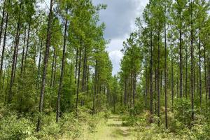 Benton Hunting and Timber Investment Tract - Mobile County AL