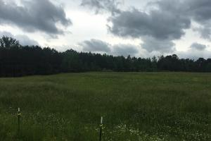 Oneonta Timber, Pasture & Hunting Tract