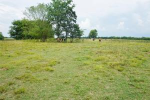 Little Prairie Creek Pasture and Hunting Tract - Hale County AL