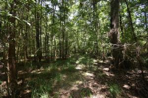 King George Rd. Timber and Homesite in Livingston in Livingston, LA (8 of 31)