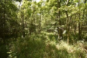 King George Rd. Timber and Homesite in Livingston in Livingston, LA (23 of 31)
