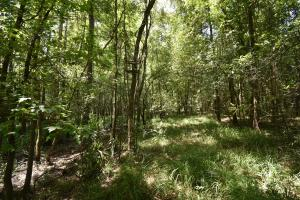 King George Rd. Timber and Homesite in Livingston in Livingston, LA (27 of 31)