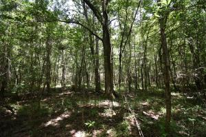 King George Rd. Timber and Homesite in Livingston in Livingston, LA (19 of 31)
