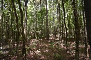 King George Rd. Timber and Homesite in Livingston in Livingston, LA (15 of 31)