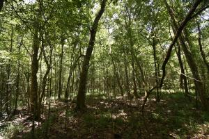 King George Rd. Timber and Homesite in Livingston in Livingston, LA (30 of 31)