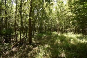 King George Rd. Timber and Homesite in Livingston in Livingston, LA (25 of 31)