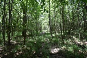 King George Rd. Timber and Homesite in Livingston in Livingston, LA (22 of 31)