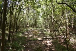 King George Rd. Timber and Homesite in Livingston in Livingston, LA (14 of 31)