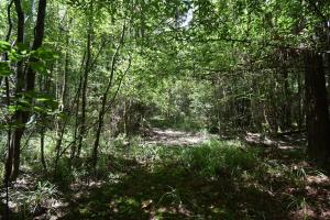 King George Rd. Timber and Homesite in Livingston in Livingston, LA (16 of 31)