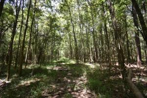 King George Rd. Timber and Homesite in Livingston in Livingston, LA (21 of 31)