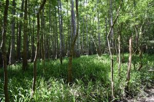 King George Rd. Timber and Homesite in Livingston in Livingston, LA (28 of 31)
